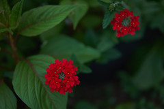 DSC04167 (@saka) Tags: autoupload flowers 69646981 leaves 1030 street 346