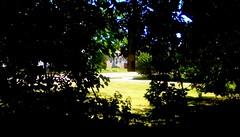 Backyard through the trees - TMT (Maenette1) Tags: backyard trees lawn neighborhood menominee uppermichigan treemendoustuesday flicker365 allthingsmichigan absolutemichigan projectmichigan amazonfirehdcamera