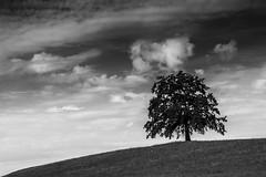 Lonely tree (hjuengst) Tags: tree baum clouds wolken bavaria bayern blackandwhite schwarzweis