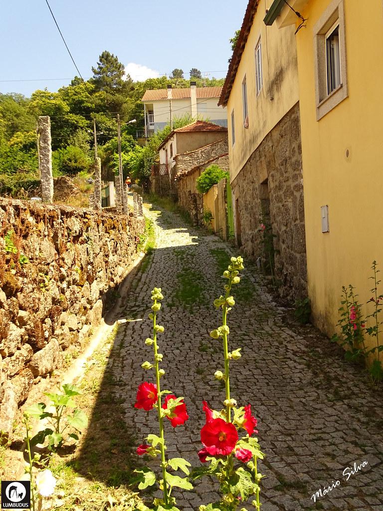 Águas Frias (Chaves) - ... a rua da Nª Sª dos Prazeres espontaneamente florida ...