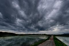 梅雨空 #4ーRainy season Sky #4 (kurumaebi) Tags: yamaguchi 秋穂 山口市 nikon d750 nature landscape sunset 夕焼け 夕 田 田んぼ ricefield cloud 雲 reflection