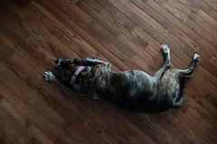 210/365 (Garen M.) Tags: dogs emmie chip buttercup jojo cats ella