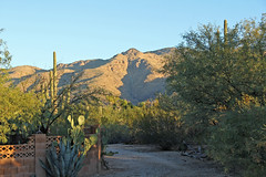 Morning in the Mountains (craigsanders429) Tags: arizona arizonamountains tucsonarizona cactus saguarocactus mountains desert sonorandesert santacatalinamountains