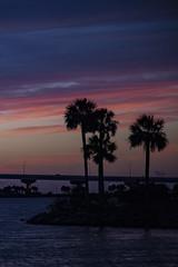 Pre dawn silhoette (in Explore) (mimsjodi) Tags: sunrise dawn sky clouds titusvillefl marina indianriverlagoon palms palmtrees challenge silhoette groupchallenge