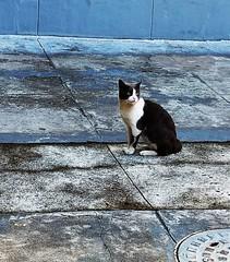 o gato do vizinho (luyunes) Tags: gato gatoderua bicho cat chien animal motozplay luciayunes