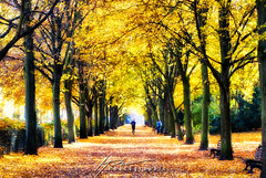 Golden Canopy... (Howard Brown Photographic) Tags: fall autumn leaves leav trees tree runner jogging jogger park central berlin germany volkspark humboldthain hdr