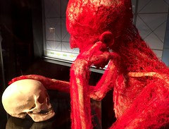 The quick and the dead (oobwoodman) Tags: germany deutschland allemagne heidelberg körperwelte bodyworlds anatomy science circulatorysystem kreislauf arteries veins ader bloodvessels skull schädel crâne pensive thought thinker think ponder