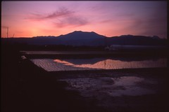 (✞bens▲n) Tags: minolta cle provia 100f rokkor 40mm f2 film analogue slide japan nagano rice fields mountains sunset evening reflection landscape