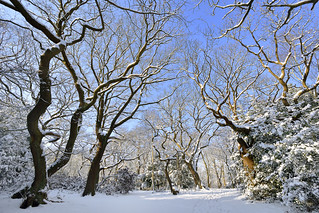 In the snow covered forest  -  (Selected by GETTY IMAGES)  &  Selected for FLICKR EXPLORE
