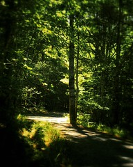 The woods are lovely, dark and deep...  #summer #vacation #maine #mtdesertisland #carriageroad #acadia #nps #findyourpark #nationalpark (Kindle Girl) Tags: mtdesertisland nationalpark summer vacation maine carriageroad acadia nps findyourpark