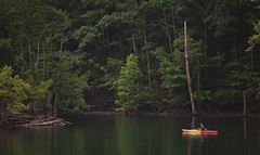 he said he was going out to get dinner.... (Kathy Froilan | wandering.in.the.woods) Tags: fishing kayak lake calm serene man boat fishingrod trees shore rock dalehollow tennessee forest woods wood water tree canoneos5dmarkii canonef70200mmf28lisiiusm fishingfromakayak