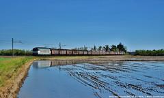 E652 050 (MattiaDeambrogio) Tags: e652 mercitalia rail tigre trenitalia cargo xmpr merci coils vignale novara risaia allagata riflesso