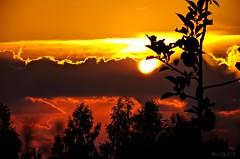 Sunset with young apple tree. (EQG64LOQDXKYEIAPTYHNDN5KHB) Tags: apple tree õunapuu loojang tartu eesti ee pilved sunset estonia