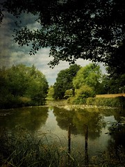 The dog walk. (Christine Padmore) Tags: leaves waterlilies pond lake vintage texture trees summer uk england landscape
