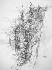 P1018502 (Gasheh) Tags: art painting drawing sketch nature tree trees pencil gasheh 2018