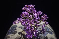 Illuminated (petrapetruta) Tags: violet flowers bouquet
