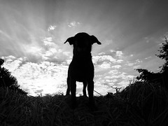 Outlined (Zandgaby) Tags: dog backlight backlit epic fun sundown black white sky clouds