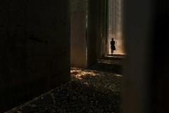 The Garden of Exile (fehlfarben_bine) Tags: nikondf nikon160350mmf40 streetphotography jewishmuseum berlin silhouette stelae daniellibeskind contrast mood pathways patterns thegardenofexile