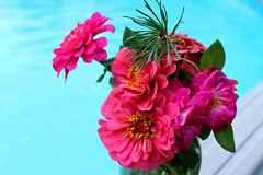 IMG_1207 (sally_byler) Tags: zinnias roses twig pine summer ohio nature plants bouquet pool