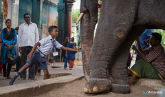 [India] Southern India - July 2018-6 (#vmivelaz) Tags: india inde asia asie voyage travel canon 1dx vinz wwwvincentmivelazcom vmivelaz vincent mivelaz photography co