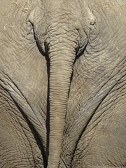elephant head or tail? (gerben more) Tags: elephant tail back zoo animal