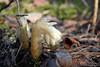 DSC_9478 (sevbette) Tags: лес осень чудесаприроды