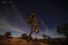 Joshua Dreams (Matt Straite Photography) Tags: tree desert national park night starts clouds long longexposure tripod