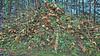 20180331_172539_m (wos---art) Tags: bildschichten schneebruch sturmbruch äste bäume aufräumen haufen