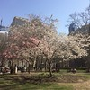 Rittenhouse Square, Spring 2018 (htomren) Tags: phonepics philadelphia rittenhousesquare spring trees parks