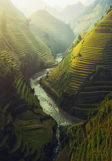 Vietnam Rice terraced