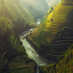 Vietnam Rice terraced thumbnail