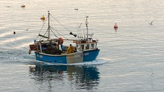 Bringing Home The Catch (brwestfc) Tags: flushing boat fishing water trade seagull trawler crab fish lobster sea ocean