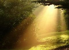 DSC03208b (Naturecamhd) Tags: sonycybershotdschx90v dschx90v hx90v newyorkbotanicalgarden nybg botanicalgarden nature bronx green eco morning sunlight sunrise conifer