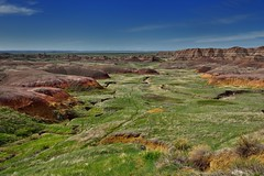 Prairie Grasses Sway in the Morning Breeze Under Blue Skies (Badlands National Park)