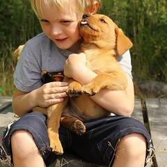 Bonne journée avec Amimal! 🐕😍🐾⠀ ⠀ (Ami_mal) Tags: animauxdecompagnie animal chien chat