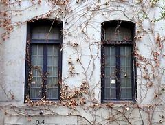 Miss Havisham's windows, West 12th Street, Greenwich Village, New York