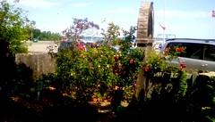 Library garden -HFF (Maenette1) Tags: garden flowers fence spiespubliclibrary menominee uppermichigan happyfencefriday flicker365 allthingsmichigan absolutemichigan projectmichigan michiganlibraries