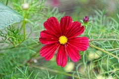 Looking at ehe sun (Nikolaos Gavrilakis) Tags: gavrilakis nikon d750 24120 wilhelma garden flower λουλούδι κήποσ στουτγάρδη νίκοσγαβριλάκησ