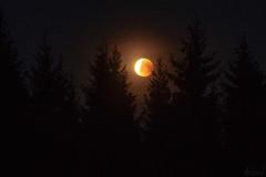 End of the Blood Moon eclipse (Karl Adami - www.karladami.com) Tags: bloodmooneclipse nightsky space dark forest woods nature pärnumaa estonia european northern summery moody mystical 2018 mooneclipse2018 late eesti beautiful landscapes