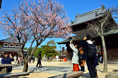 Daiganji Temple (Gedsman) Tags: japan asia northeastasia eastasia traditional culture cultural shinto buddhist tower neon lights travel beauty architecture island temple photography hiroshima miyajima sea seto inland castle atomicbomb abomb atomic bomb