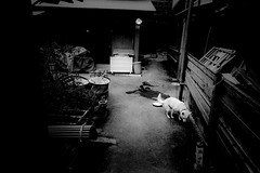 alley 676 (soyokazeojisan) Tags: japan osaka alley night light dog street city bw blackandwhite monochrome analog olympus m1 om1 21mm film trix memories 昭和 1970s 1975 kodak