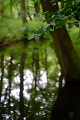 greenery in magical forest (Ola 竜) Tags: green leaves tree branch foliage twigs forest stream water reflection bokeh manualfocus jupiter8 fujifilmxt10 dof greenery nature thewoods reflecting brook pond branches bark trunk trees plant reflections park