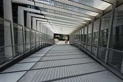 overpass (Greg Rohan) Tags: lines pedestrianbridge brisbane pedestrians people walkway overpass sydney barangaroo tunnel d750 2018 nikon nikkor architecture