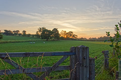 Sunrise (scottprice16) Tags: england englishsummer lancashire fields countryside gate sheep trees sunrise sky ribblevalley ribbleway fence morning summer 2018 july contrails green blue orange colour walking outdoors leisure activity peaceful canon canong3x