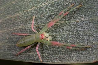 Stunning spider