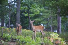 Edit -1-10 (Dane Van) Tags: canadacreekranch atlantamichigan upnorth puremichigan deer doe canon