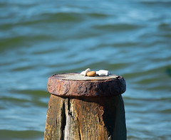 Stones on breakwater (kerryhilden) Tags: stones pebbles beach sea seaside summer breakwater whitstable coast coastline
