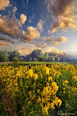 Honor All With Whom We Share The Earth (Phil~Koch) Tags: clouds wisconsin scenic vertical photography office portrait serene morning dawn nature natural earth environment inspired inspirational season beautiful hope love joy dramatic unity trending popular canon rural fineart arts shadow sun sunrise light peace shadows endless pastel sunlight green blue summer flowers wildflowers