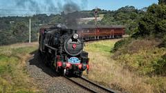 Over the edge (SJB Rail) Tags: 5917 d59 steam trains railways railroads illawarra rail baldwin picnic train lvr