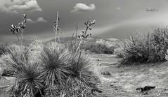 Desert Scenery (Barb McCourt) Tags: jeepexploration borderland mountains texas elpaso epphotography bw bnw blackandwhite blackandwhitephotography nikonphotography nikon nikond810 cactus desertexploration desertlandscape desertvegetation desertsouthwest desert